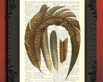 pheasant feathers, feather art vintage, feather illustration on antique book page, feather print