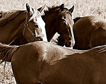 Horse photo,western art,photograph,horse lovers, horse art, wall art, home decor,farm house, country home, country home,made in Canada