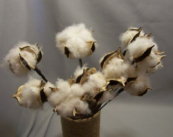 """12 each--10"""" Wired Stemmed Natural Dried White Cotton Bolls, Wreaths, Country Weddings, Primitive Decor, Swags, Garlands"""
