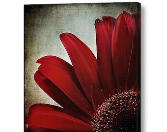 Dark Red Crimson Flower Floral Petals Mum Daisy, Romantic Lush Dramatic Square Fine Art Photography Print on Gallery Canvas Wrap Giclee
