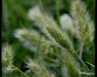 Eye of the Beholder - Seed Pod - Green Grass - Fine Art Photograph by Kelly Warren