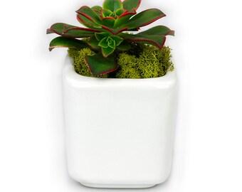 Wedding Favors Ceramic Succulent  Planter Pot w/Succulent - Succulent Plants, Small Succulent Pot, Potted Succulents, Succulent Planters