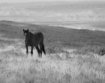 Black and White Wild Horse Photography, Horse Photography, Horse Art, Horse Picture, Horse Wall Decor, Horse Wall Art, Horse Print, Horse