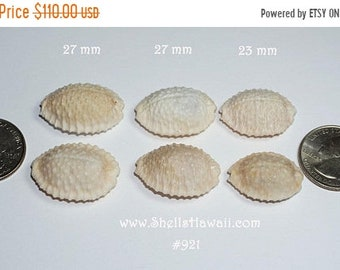 Set of 3 pairs off white Granulate Cowrie shells #921