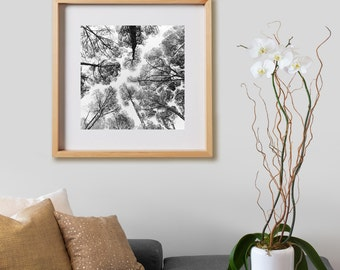 Casa de Campo Print.  Black and White photography, trees, autumn, decor, wall art, artwork, large format photo.