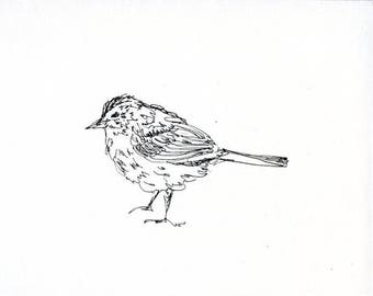 Skizzenbuch Verkauf - Vogel #11 Original Tuschezeichnung - 8 x 10 Songbird Original-Kunst