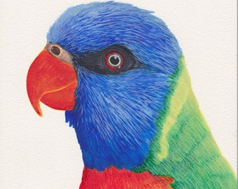 Watercolor lorikeet bird painting, 6x6 painting framed in a 8x8x1 black shadowbox, original artwork