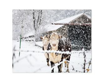 Cow Art Print, Farmhouse Decor Art Print, Bovine Cow Photo, French Farmhouse Rustic Decor, Large Wall Art, Winter Art, Snowy Cows Print