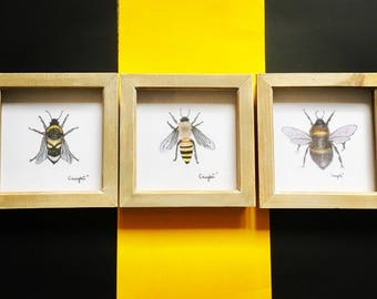 "Framed Bee XL Print Wall Art Trio collection  - 6""x6"" insect art rustic wall art, bumblebee prints"