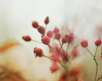 Red Photography, Nature Bokeh Red Berry Branch, Cranberry Scarlet Red Print, Golden Orange, Ethereal Nature Print 8x10
