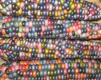 50pcs Glass Gem Corn Seeds Heirloom 2018 Non-Gmo Heirloom Seed (US ONLY)