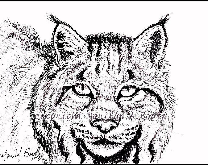 PRINT-5 x 7 inch PEN & iNK - Canadian Lynx, black and white, wildlife, wilderness, Canada, option yellow eyes,