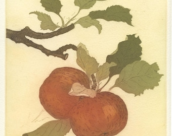 Tompkins King Apple, Fine Art Etching
