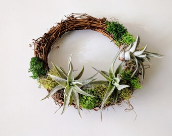 Air Plant Wreath with Air Plants, Spanish Moss and Reindeer Moss