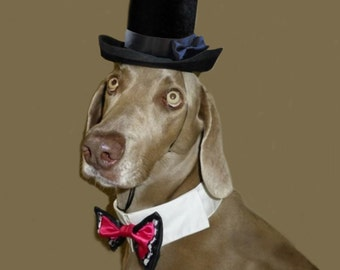 Dog_Cat Top Hat - Dog Wedding Costume- Dog Wedding Attire-The Aristocrat Top Hat for dogs_cats