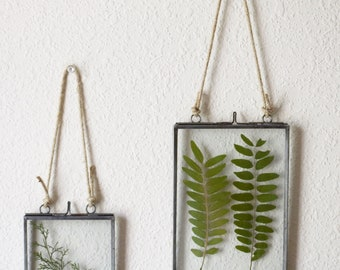Pressed Leaves   Floating Frame   Wall Art   Wall Decor