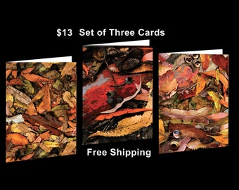 3 Art in Australia Bush Carpet Greeting Cards Free Shipping Australia Wide.