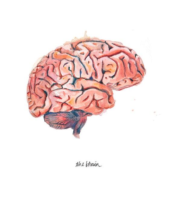 The Human Brain Sagittal View Watercolor Print Anatomical