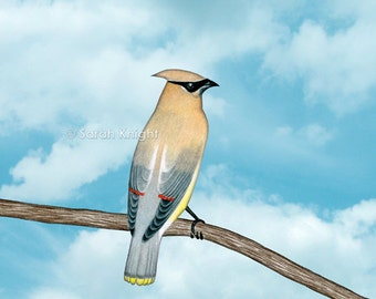 cedar waxwing and blue sky - signed digital illustration art print 8X10 inches - beige gray perched bird aqua white clouds