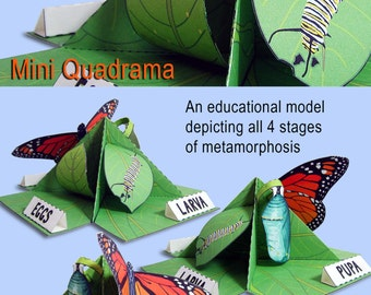 Monarch Butterfly Life Cycle Mini Quadrama Educational Paper Toy Model