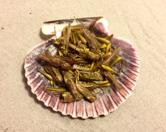 Grasshoppers ~ Hermit Crab Food