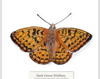 Dark Green Fritillary - Butterfly - Print - Original Acrylic Painting - 15.6 x 15.6cm