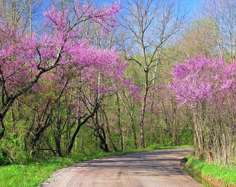 Spring Photography 5x7 Country Road Inspirational Nature Art Print
