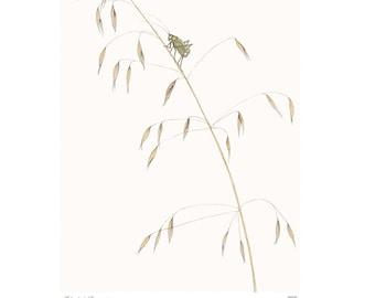 Fork-tailed Bush Katydid Vintage Style Print