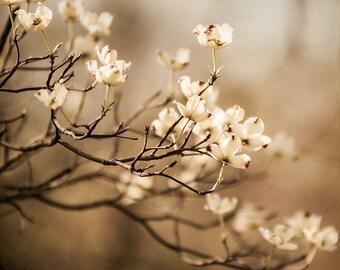 Nature Photography, Dogwood Art Print, Decor for Walls, Flower Art, Off White, Beige Botanical, Light Brown, Floral Home Decor, Neutral tone
