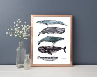 Whales Illustrated Poster, Different Types of Whales, Nautical Art, Seaside Print, Illustrated Poster, Sealife Print, Whales Stacked, Art