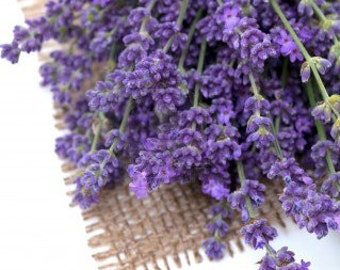 Organic Vera English Lavender Heirloom Herb Flower Seeds