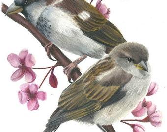 """ORIGINAL sparrow colour pencil drawing 29x21cm  """"Cute Couple"""