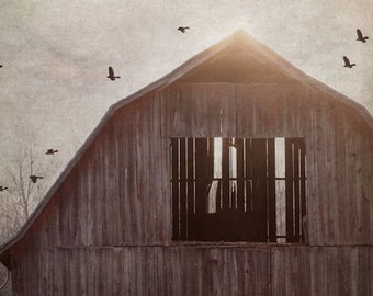 Crow Print, Barn, Country Life, Black Crow Print, Crows, Flock of Crows, Nine, 9 Crows, Fine Art Photography