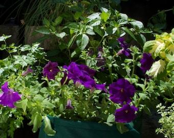 Green Felt Planter Boxes for Gardening by Urban Greenie
