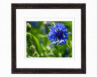 Blue Flower Garden Photography Print Fine art Nature Photography Wall Art Prints Home Decor Photos for Cards Floral Print Flower Photography