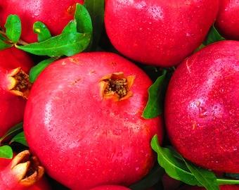 Organic Ponderosa Pomegranate Jelly