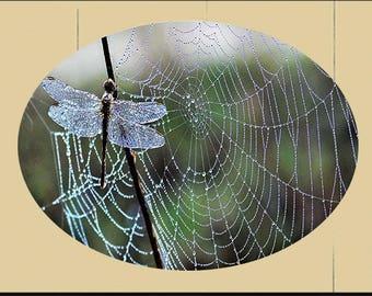 lg Suncatcher -Dragonfly