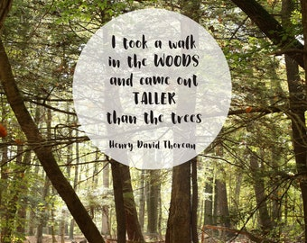 Earth Day Nature Quote, Printable Henry David Thoreau Taller than the Trees forest photograph dorm poster, teacher Gift, jpg 5x7 8x10 14x18