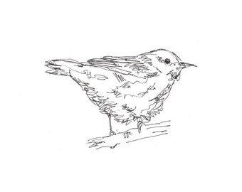 Bird Art, Yellow Warbler - Giclee Print - songbird, line drawing, pen ink