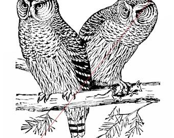 Owls - Temporary tattoo