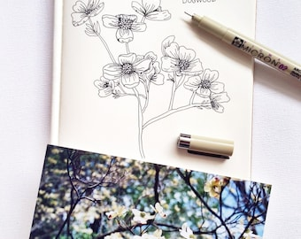 Dogwood Pen and Ink Drawing
