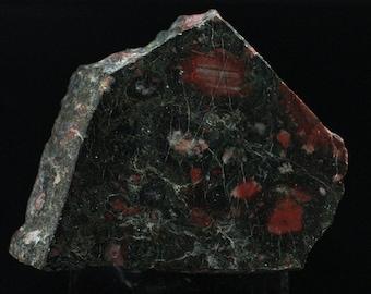 Dinosaur Bone polished slab, Utah  Mineral Specimen for Sale
