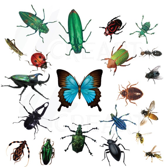 Watercolor Insects And Bugs Clipart Pack Vectors For