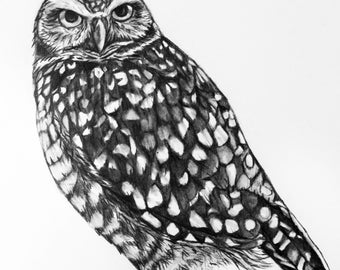Owl Pencil Graphite Drawing - 77