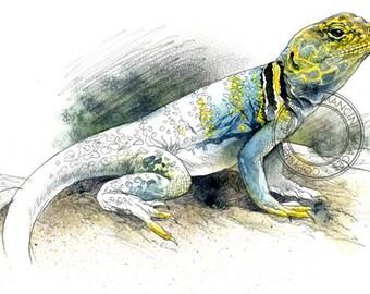 Collared Lizard watercolour - wildlife art - nature print of original artwork