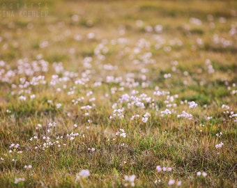 BLOOMING photography print,  scottish spring flower fields, 8x12