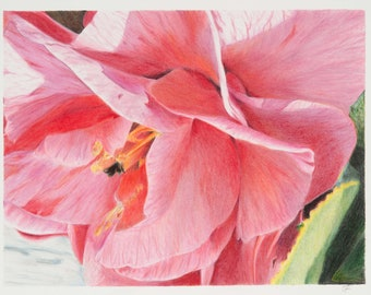 Perfect in Pink -- Fine Art Prints (unframed art)
