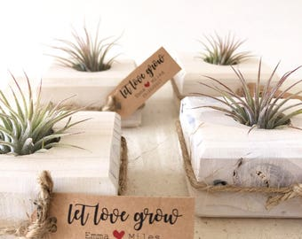 Rustic Wedding Favor//Succulent Wedding Favors// Air Plant Wedding Favor// Bridal Shower Favor// Bridesmaid Favor// Baby Shower Favor