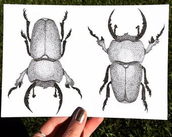 Hand Drawn Original Beetle Ink Drawing