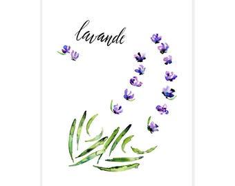 Lavande (Lavender) 11x14 Original Watercolor + Calligraphy Art Print